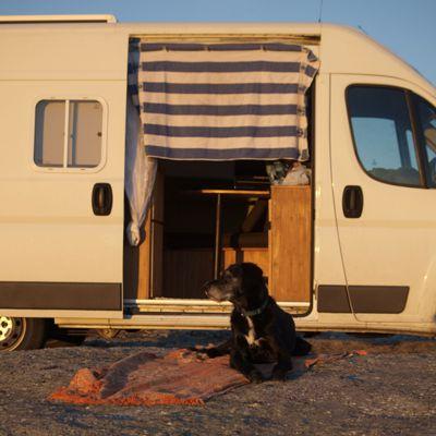 Auch Hunde stehen auf Sonnenuntergänge.