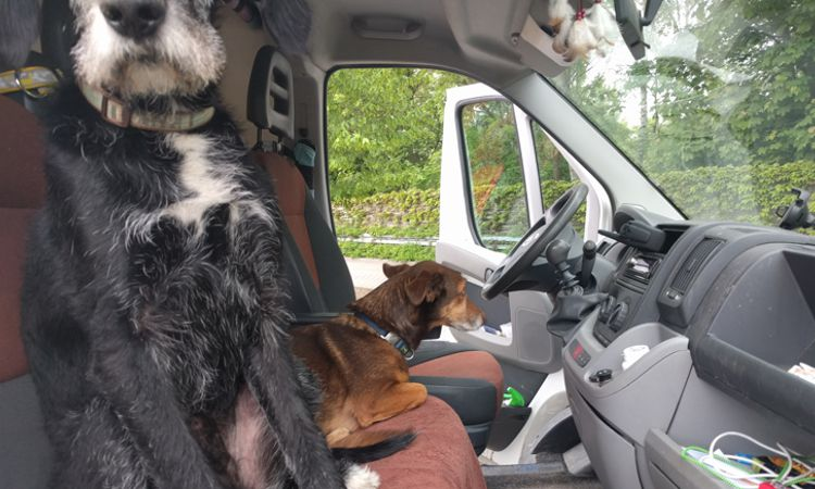 Hunde fahren gerne Wohnmobil