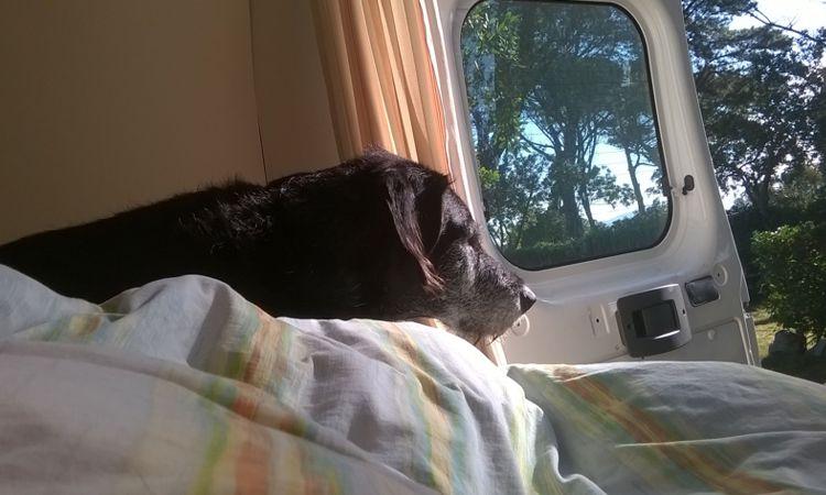 Mein/sein Hundebett im Wohnmobil.