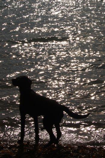 Campingurlaub mit Hund: hundefreundliche Campingplätze