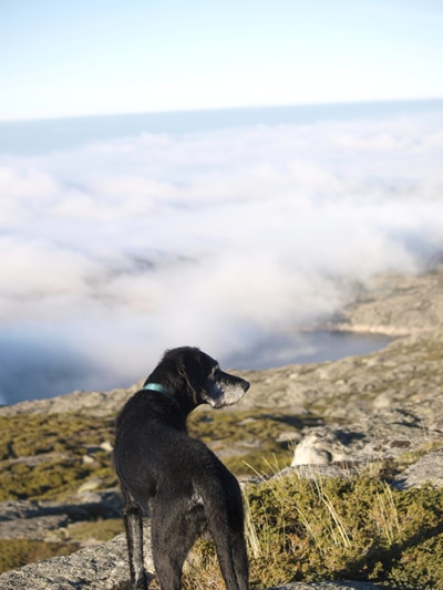 Über den Wolken: Serra da Estrela