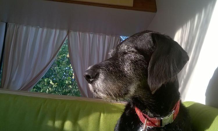30 Grad im Schatten, 40 Grad im Wohnmobil: manche Hunde stehen drauf.