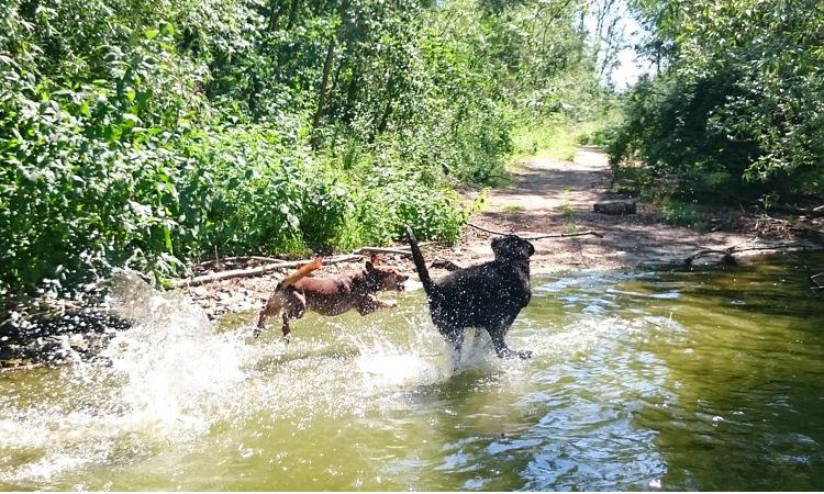 Wasserspiele mit Max und Tizon