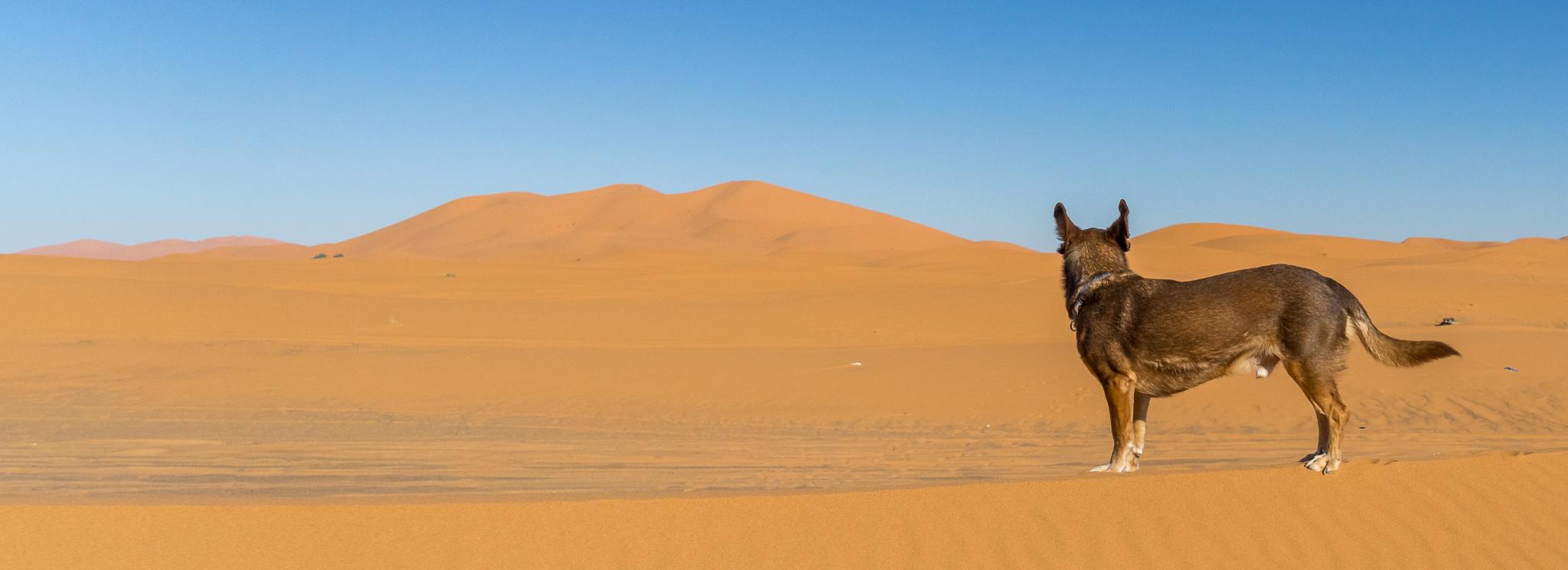 Marokko III: Hoher Atlas bis Merzouga – Berge und Wüste