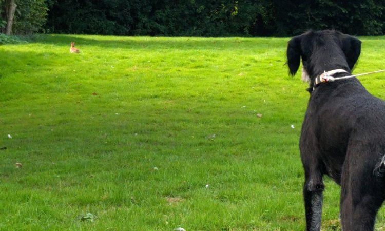 Typisch Tizon: Häschen stalken geht immer, auch mit Grauem Star.