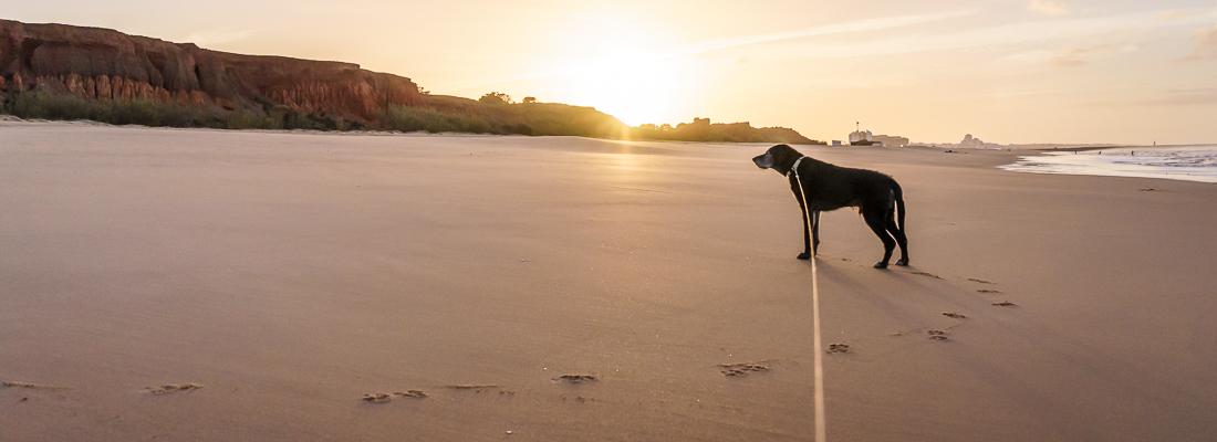 Strand, Stadt, Quad. Die Algarve kann was!