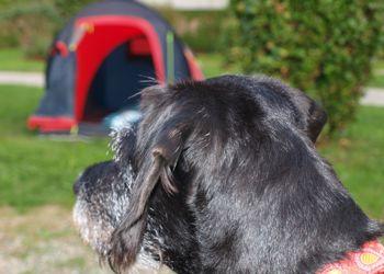 campingurlaub mit Hund am Bodensee