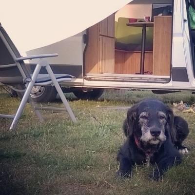 Tizon auf seinem Posten. Campingplatz bei Bautzen.