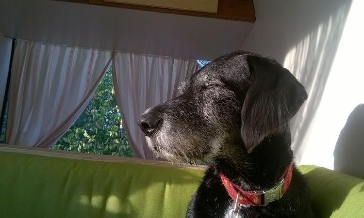 crosli-hund-im-wohnmobil