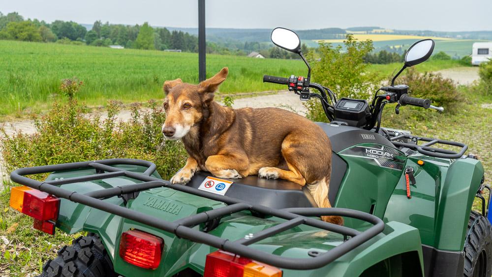 Max auf dem Kodiak