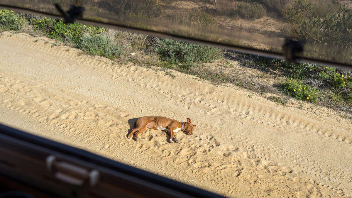 Schlafender Hund vor dem Wohnmobil