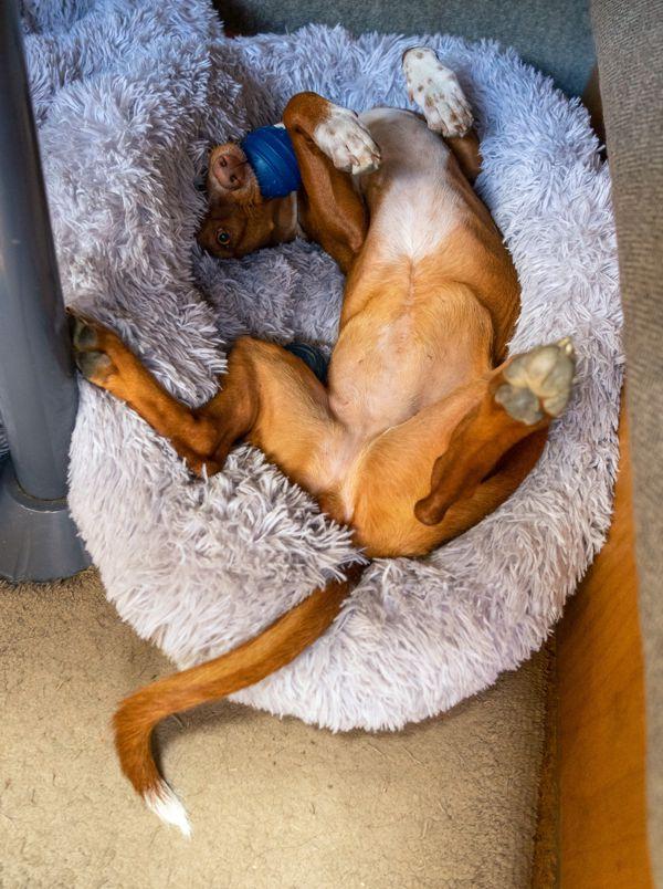 Hund in Wohnmobil sichern