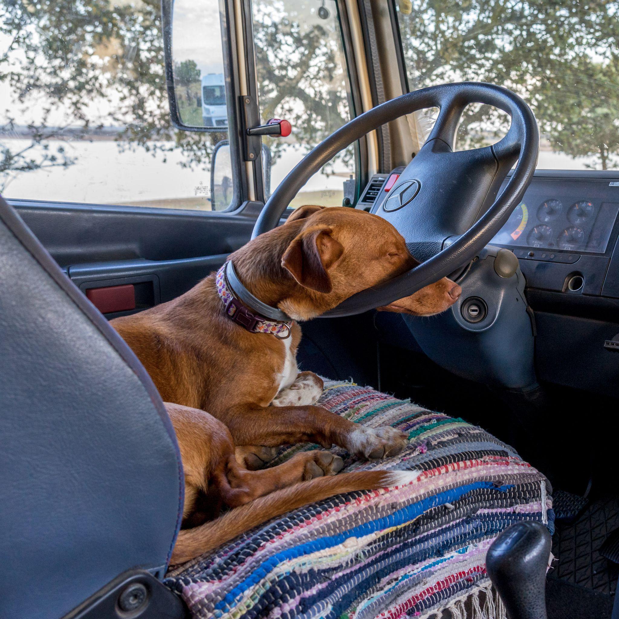 Wohnmobilhund Ziva