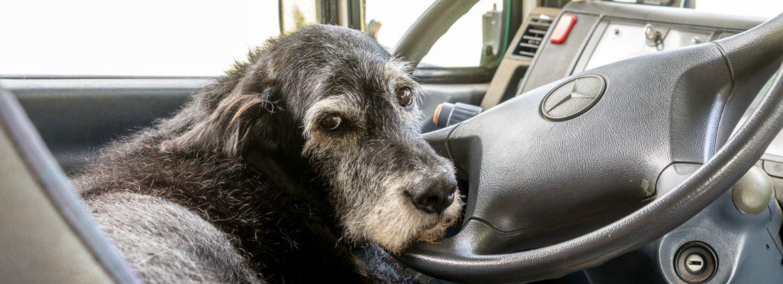Mit Hund im Wohnmobil | der große Survivalguide