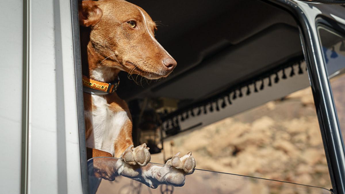 Marokko mit Hund im Wohnmobil