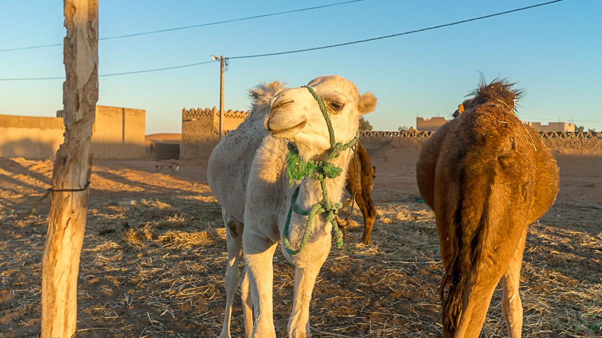 Tierschutz in Marokko