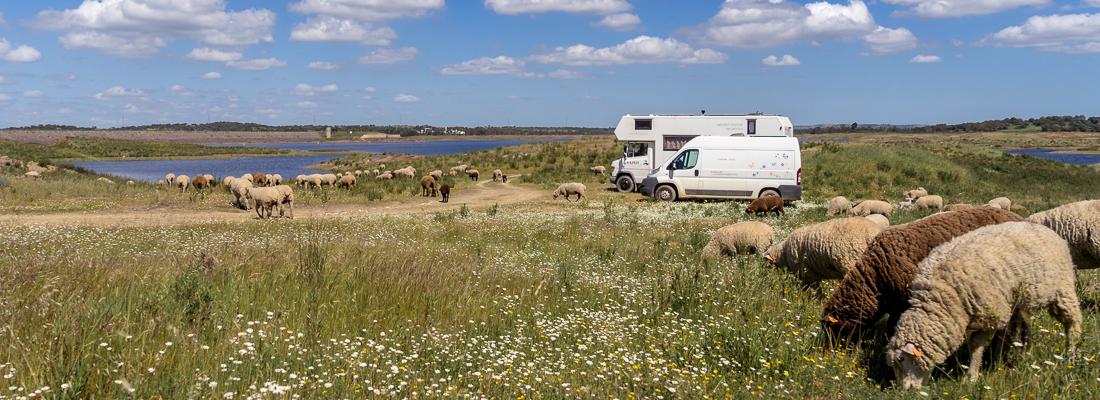 Algarve, letztes Kapitel: mit flauschigen Delfinen kuscheln