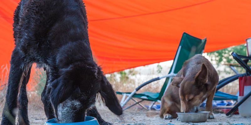 Ohne Klimanlage, mit Hund im Wohnmobil