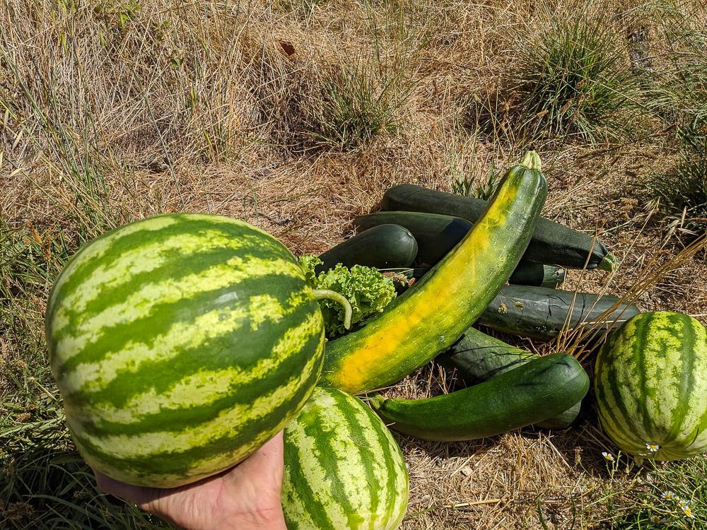 Permakultur Gemüseanbau Portugal