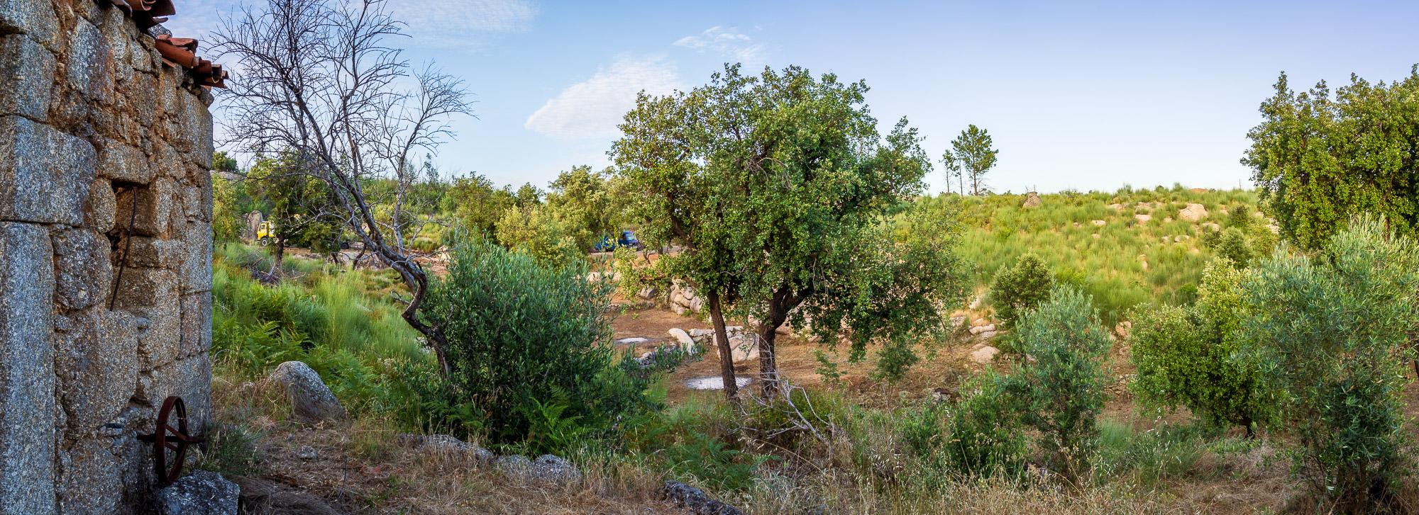 Ein Grundstück in Portugal kaufen