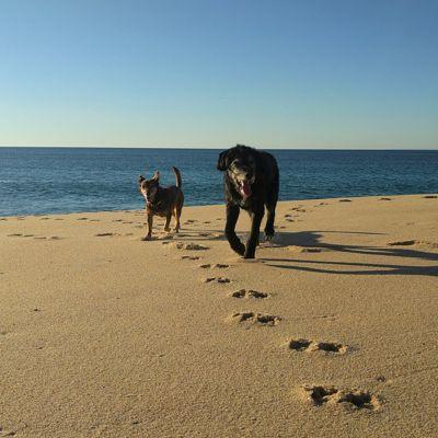 Strandtage am Praia da Aberta Nova