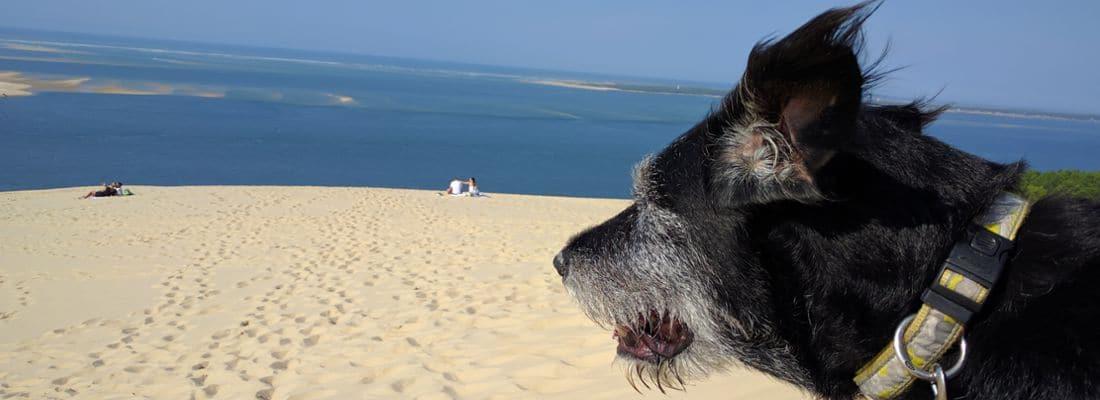 Von der größten Düne Europas auf den höchsten Berg Portugals