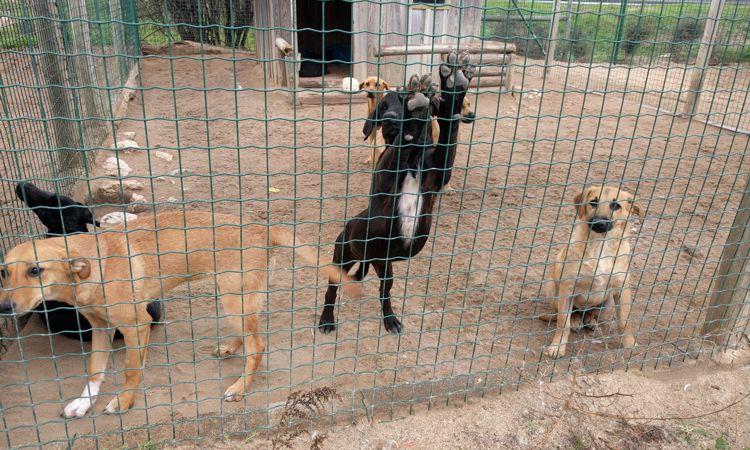 Junghunde im Tierheim - werden sie hier alt werden?