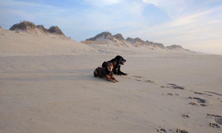 Auch Max und Tizon haben den Strand vermisst ...
