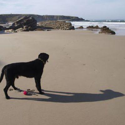 Neues Hundespielzeug, feiner Strand: noch in Asturien.