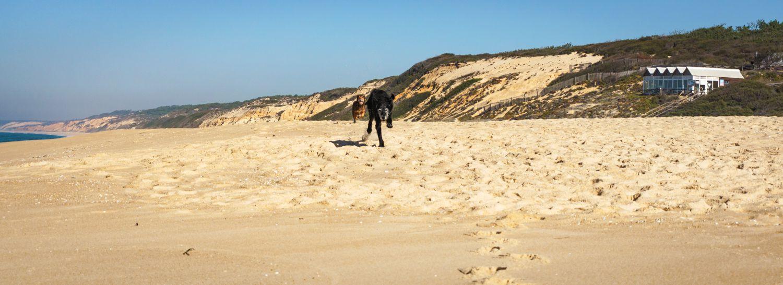 Strandtage mit Tücken