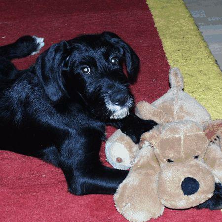 Tizon 2005: Hund mit Hundi