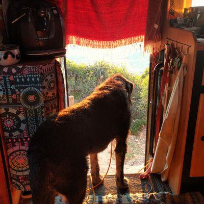Der Wachhund in der Nachmittagssonne