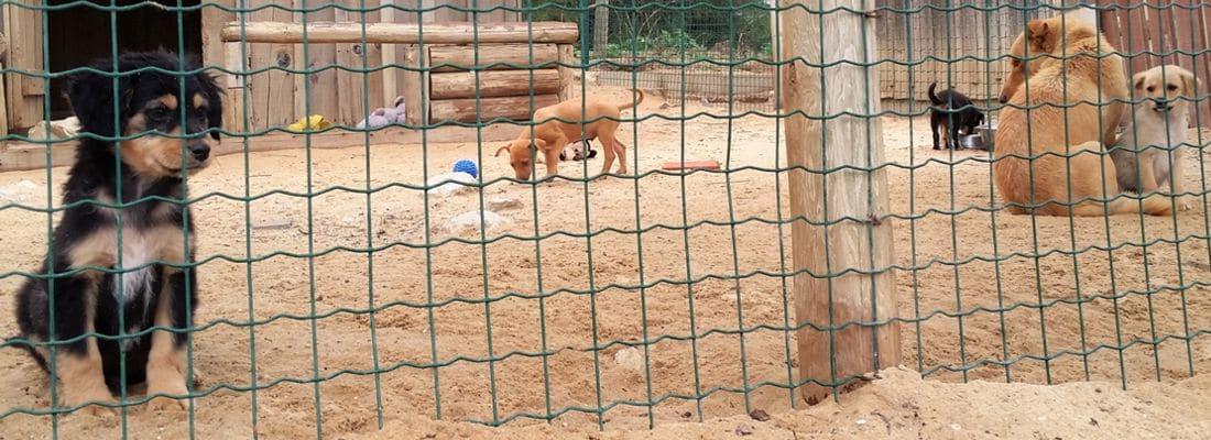 Max, die Glücksfee und 870 weitere Hunde
