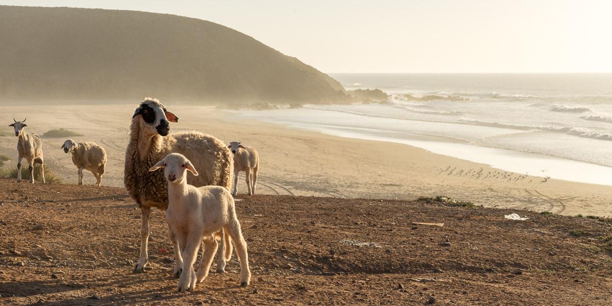 Wohnmobil-Reise nach Marokko