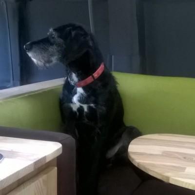 Links Küche (Spüle, Stauraum, Kühlschrank), Mitte Hund (mal wieder am Spannen), Rechts Tisch (Essen, Arbeiten). Die Eckbank ist echt gemütlich!