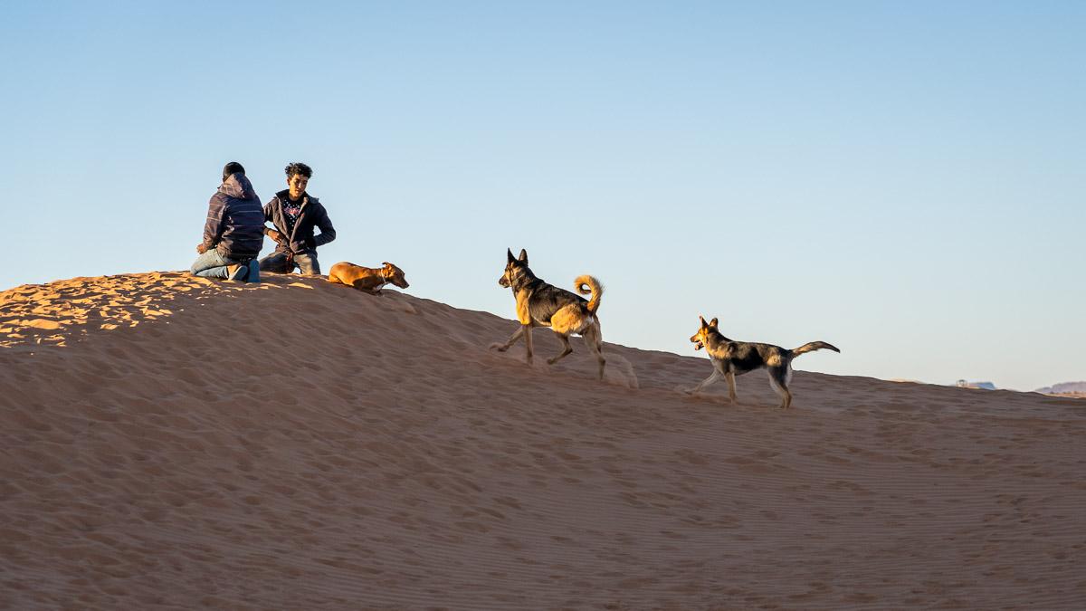 Hunde in der Wüste